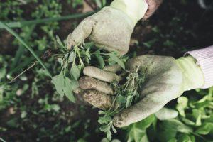 trust-gardening